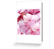 Pinkie, hydrangea flowers violet pink floral pattern Greeting Card
