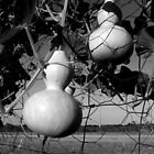 GOURDS IN BLACK AND WHITE by Sandra  Aguirre