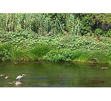 Urban Wildlife Habitat - Los Angeles River Photographic Print