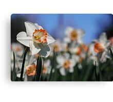 Daffodil II Canvas Print