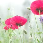 Misty Morning - A Poppy Story by Clare Colins