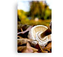 Mushroom in the woods Canvas Print
