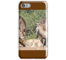 Waterbuck - African Wildlife Background - Cute Calf Antics iPhone Case/Skin