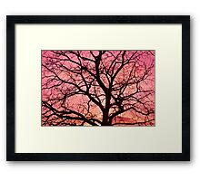 Evening Blush Tree Silhouette Framed Print