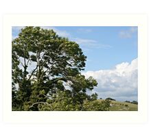 Tree in the countryside Art Print