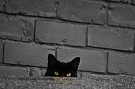 Watching Me Watching You by Ladymoose
