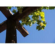 Blue Sky Grape Harvest - Thinking of Fine Wine Photographic Print