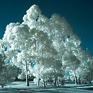 'Bluegum' infrared gum trees by BigAndRed