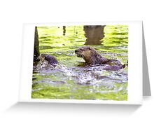 Otters Playing Greeting Card