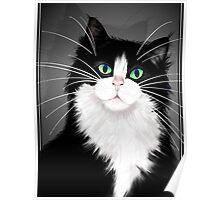 TUX-Tuxedo cats rock Poster