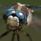 Real Closeup Dragonfly by imagetj