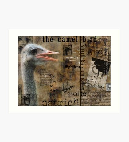 About the Ostrich Art Print