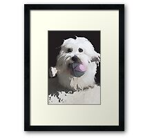 Dog, play, animal, home Framed Print