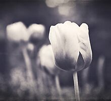 Springtime Tulips in Black and White by Kadwell