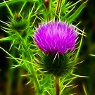 Fractal Thistle by Lisa Kent
