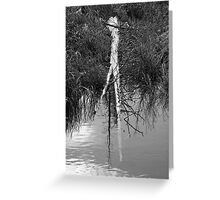 Partially submerged tree Greeting Card