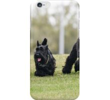 A boy (left) runs in a park with a Scottish Terrier (centre) and a black miniature poodle (right) iPhone Case/Skin