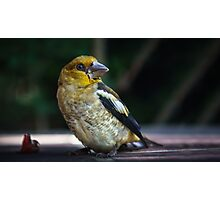 Birds portrait Photographic Print