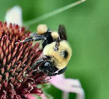 Busy Buzzy by Keala