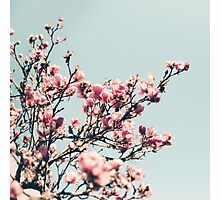 japanese magnolias Photographic Print