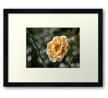 Do not Watch the Petals fall from the Rose with sadness... Framed Print