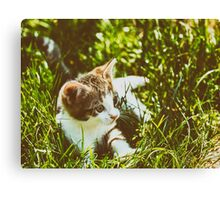 Baby Cat Playing In Grass Canvas Print