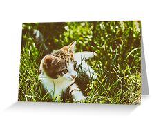 Baby Cat Playing In Grass Greeting Card