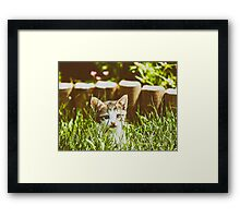Baby Cat Playing In Grass Framed Print