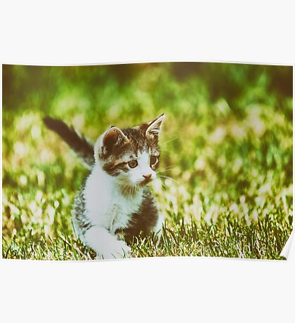 Baby Cat Playing In Grass Poster
