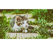 Baby Cat Playing In Grass Photographic Print