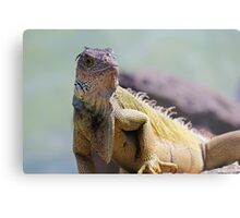 Young Adult Green Iguana Metal Print