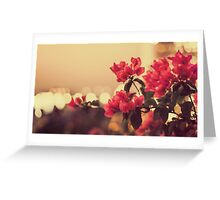 Pretty pink flowers with bokeh lights Greeting Card
