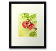 Two Red Apples - 2012 Framed Print