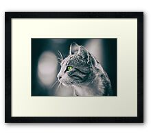 Domestic Cat Profile Portrait Framed Print