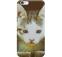 Small Baby Kitty Cat Portrait iPhone Case/Skin