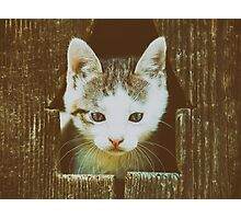Small Baby Kitty Cat Portrait Photographic Print