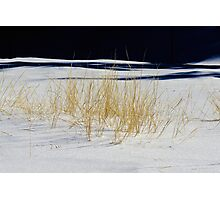 Winter Grass Photographic Print