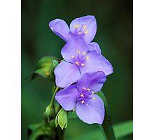 Brookgreen Garden Blue Photographic Print