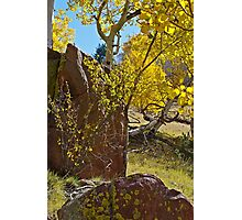 Autumn On The Hillside Photographic Print
