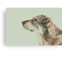 Homeless Dog Looking Up Portrait Canvas Print
