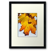 Autumn Is Ready To Fall Framed Print