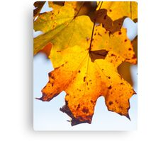 Autumn Is Ready To Fall Canvas Print