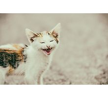 Cute Cat Meowing With A Funny Laughing Face Photographic Print