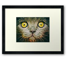 British Short Hair Cat Portrait Framed Print