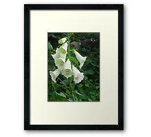 White Bells Framed Print