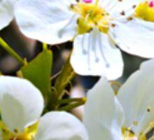 Beautiful blossoms Sticker