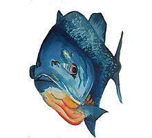 Piranha lurking, waterclour painting Photographic Print