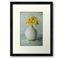 Daffodils in a white flowerpot Framed Print
