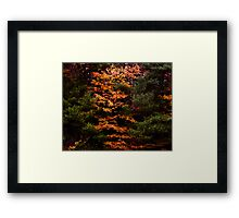 Autumn Abstract Design Framed Print