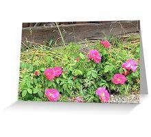 Nootka Rose Greeting Card
